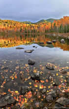 Round Pond,autumn,sunrise,light,Giant Mt,shoreline,reflection,trees,Dix Wilderness