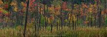 bog near Tupper Lake and Horseshoe Lake wet tree trunks telephoto panorama