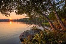 Second Pond summer sunset light on overhanging cedars