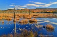 Shaw Pond,Long Lake,wetland,blue sky,sunny,autumn,2014,Shaw Pond sunny autumn day,bog,blue,