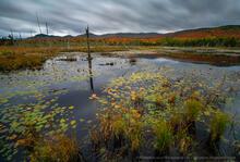 Shaw Pond, long exposure, fall, 2020, bog, Long Lake,