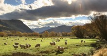 Kingston,sheep,farming,grazing,pasture,wool,New Zealand,backlit,sun,rays,shine,sunshine