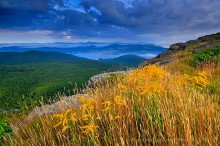 Adirondack Life,Adirondack Park,Lake George,Lake George Wild Forest,Sleeping Beauty,Sleeping Beauty Mt,goldenrod,
