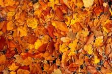 Snowy Mountain,Snowy Mt,stream,leaf,autumn,leaves,fall,2011,pileup,leafjam