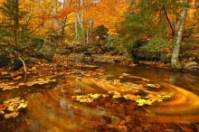 composite,Snowy Mountain,trail,stream,whirlpool,floating,leaves,fall,swirling,