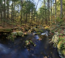 Spectacle Brook,Schroon Lake,Pharaoh Wilderness,Spectacle Pond Outlet,late,fall,brook,stream,leaves,square
