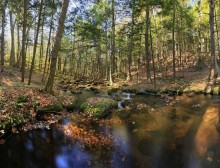 Spectacle Brook,fall,submerged leaves,brook,stream,Adirondack Park,Pharaoh Wilderness Area, Spectacle Pond Outlet,