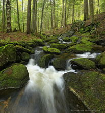 Spectacle Pond Outlet,stream,Spectacle Pond,Schroon Lake,region,mossy,rocks,spring,2014,Johnathan Esper