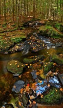 Spectacle Pond,Spectacle Pond Outlet Stream,brook,stream,vertical panorama,vertical,fall,2014,Spectacle Pond Outlet