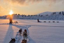 Dogsledding through the forest during sunset near Kiruna, Sweden