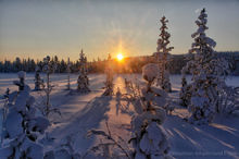 Sunrise in the forest near Kiruna, Sweden
