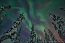 Aurora borealis above the snowy forest near Kiruna, Sweden