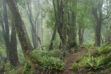 Te Urewera National Park, trail, forest, cloudy, misty