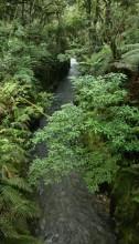 Te Whaiti Nui a Toi Canyon, Whirinaki Forest Park, New Zealand