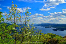 black birch,Lake George,First Mt,Tongue Mt,Adirondack Park,Adirondack,lake