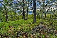 Lake George,Tongue Range,Tongue Mt,Tongue Mountain,springtime,May,2015,Johnathan Esper,Adirondack Park,Adirondacks,First Mt,forest,sunny,oaks,oak forest,Adirondack
