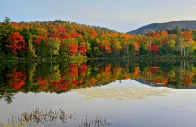 Mt Morris,Tupper Lake,bog,reflection,fall,foliage,autumn,Litchfield Park,lily pads,