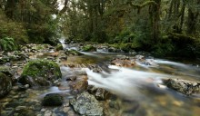 Upper Spey River, Spey River, Fiordland National Park, Dusky Track, rainforest, stream, mossy, lush, temperate, wilderne