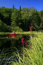 kayaker,red,kayak,wildflowers,Adirondacks,Adirondack,Adirondack Park,kayacking,New York State,