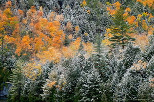 Chapel Pond,autumn snowfall,autumn,snow,snowfall,snow dusting,October,forest,Adirondack,Adirondack forest,Johnathan Esper,shoreline,telephoto,foliage
