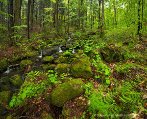 Rainy spring forest stream near Hope Falls, southern Adirondacks