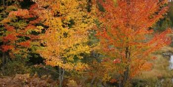 Adirondack Autumn Foliage 1