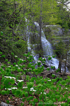 Beaver Meadow Falls in spring, Ausable Valley