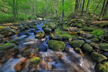 Newberry Pond Outlet stream, Black Brook area