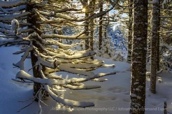 Cascade Mt wintry forest near summit