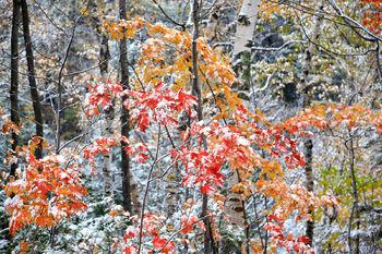 Chapel Pond forest under autumn snowfall
