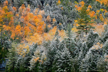 Chapel Pond shoreline forest October snow dusting