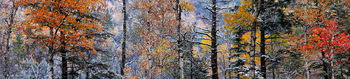 Chapel Pond forest October snowfall panorama