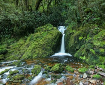 Fiordland Nat'l Park rainforest cascade