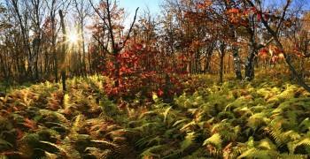 Hadley Mountain fern forest