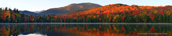 Heart Lake and Algonquin Peak sunrise panorama with a loon swimming by