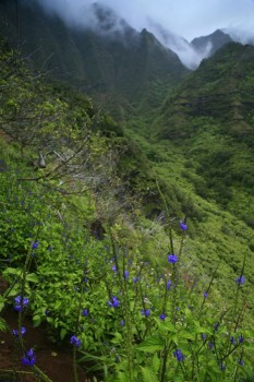 wildflowers on the steep Na Pali cliffs