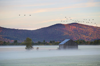 Norman Ridge fields and barn with Canada geese flying by, Vermontville