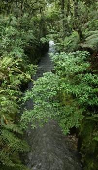 Te Whaiti Nui a Toi Canyon, Whirinaki FP