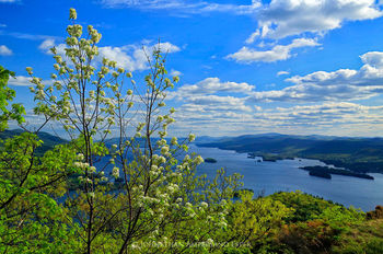Black birch flowers with Lake George behind, from First Mt
