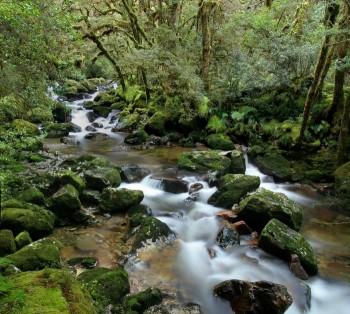 Upper Spey River, Dusky Track Wilderness