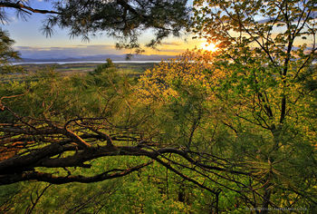 Lake Champlain and sunset over the Adirondack Mountains from a pine treetop in Vermont