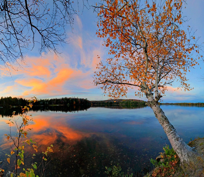 Adirondack Lake,shoreline,white,birch,sunset,yellow,reflection,, photo