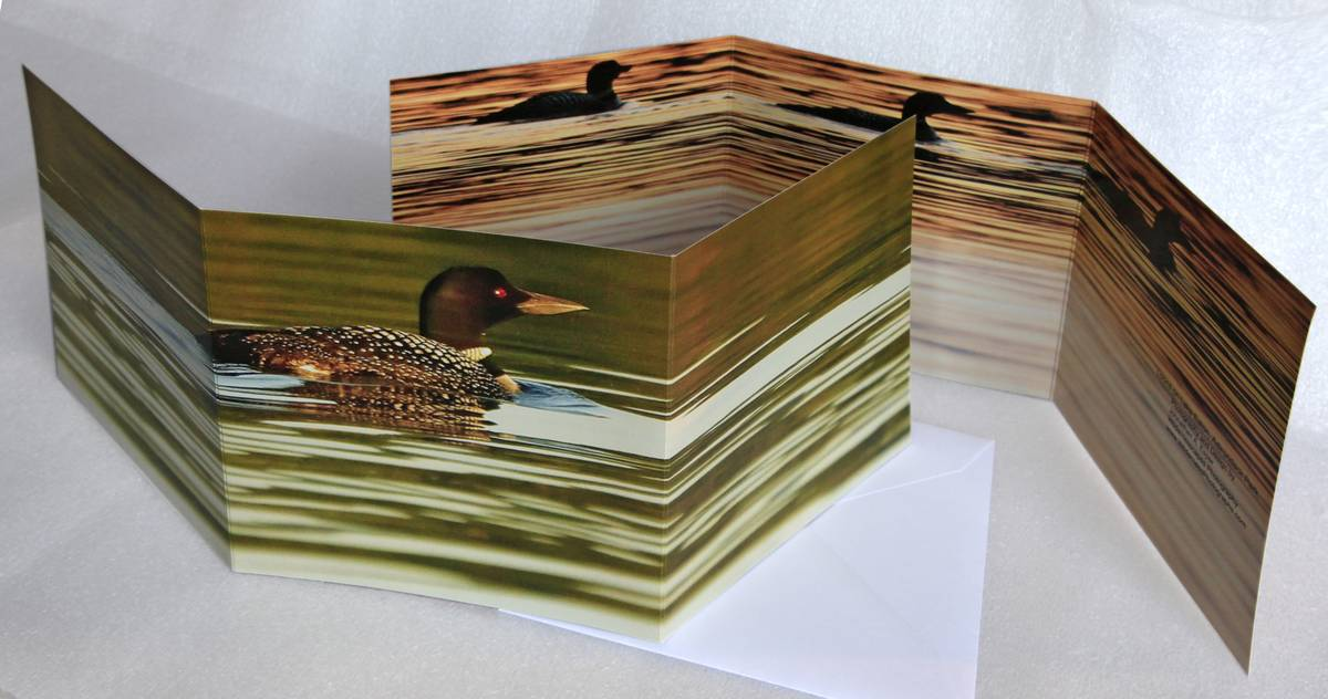 loon,lake eaton,notecard,adirondacks,trifold, photo
