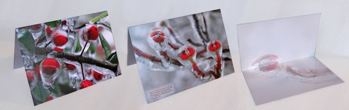 notecards,red,berries,buds,ice,storm,Messiah College,icestorm,notecard, photo