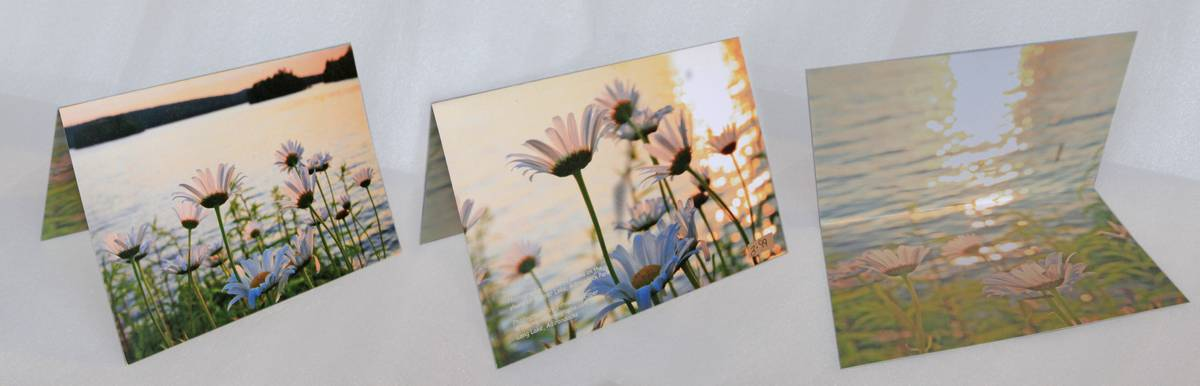 daisies,Tupper Lake,wild,notecard, photo