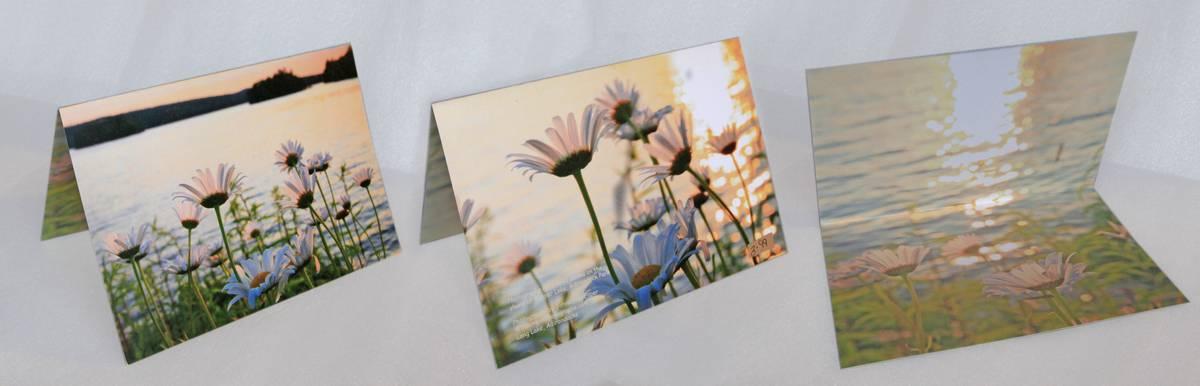 daisies,Tupper Lake,wild,notecard, photo