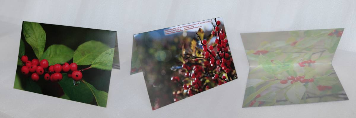 winterberry holly,red,green,berries,leaves,notecard,photo, photo