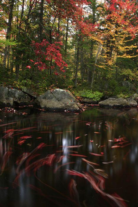 Adirondack, autumn, forest, foliage, colored, leaves, maple, red, yellow, fall, colorful, Adirondack Park, seasons, photo
