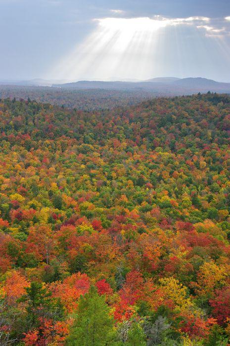 Adirondacks, Adirondack, autumn, leaves, foliage, color, yellow, maple, maples, reds, Adirondack Park, fall, Tupper Lake, photo