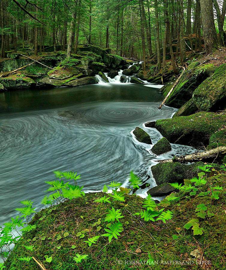 Alder Pond Outlet,Pharoah Wilderness,spring,ferns,eddy,swirling eddy,stream,brook,, photo